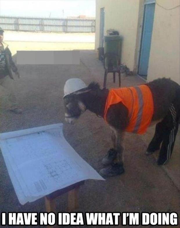 Funny donkey meme - photo#10