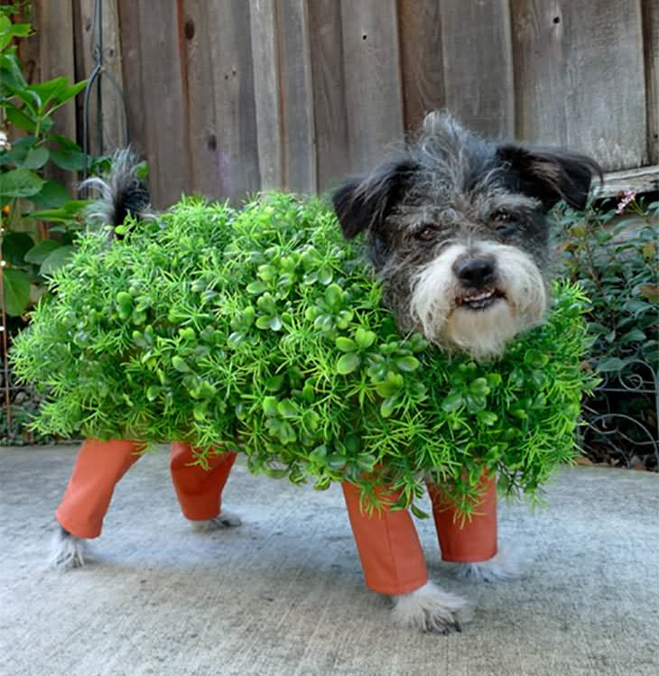 Funny Halloween Costume For Little Pets