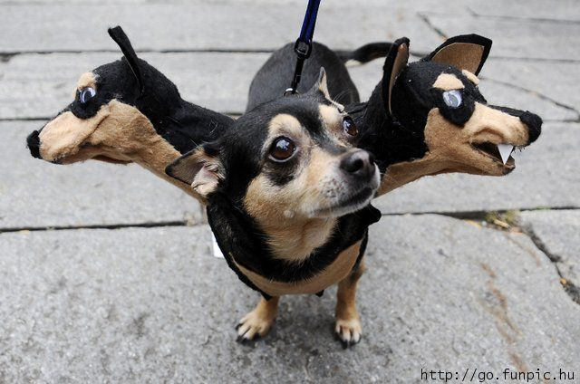 Funny Halloween Costume For Pet