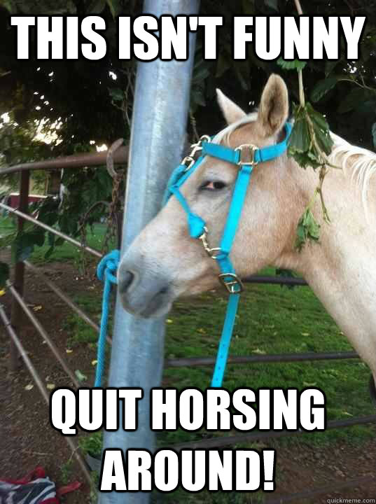 Funny-Horse-Meme-This-Isnt-Funny-Auit-Horsing-Around-Picture.jpg