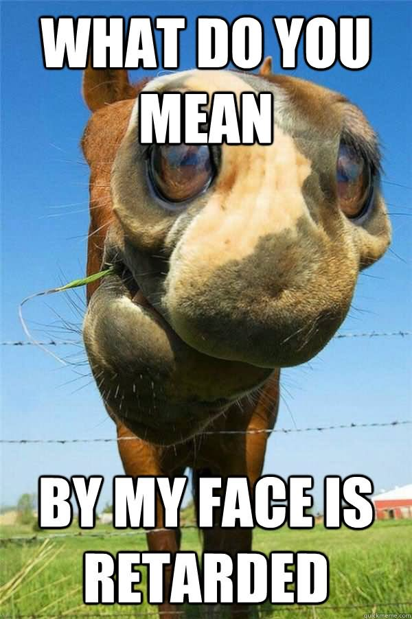 Funny Horse Meme What Do You Mean By My Face Is Retarded Image 25 very funny horse meme photos and pictures