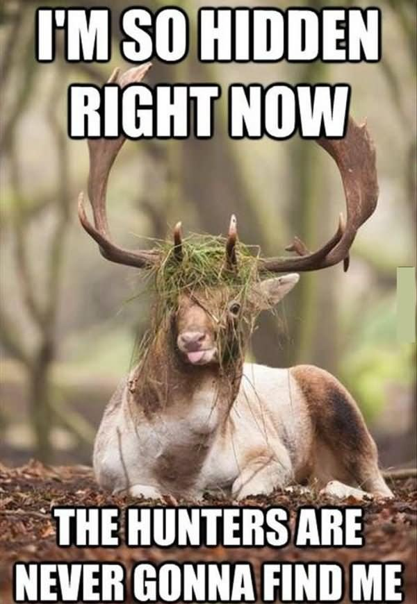 Funniest Memes Right Now : Most funniest hunting meme pictures and images