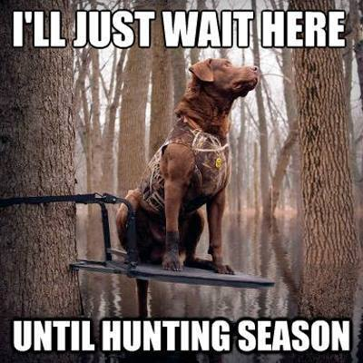Funny Hunting Meme I Will Just wait Here Image