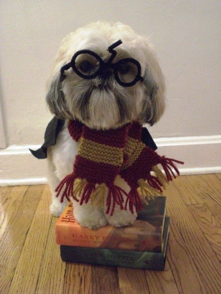 Funny Little Puppy In Harry Potter Costume