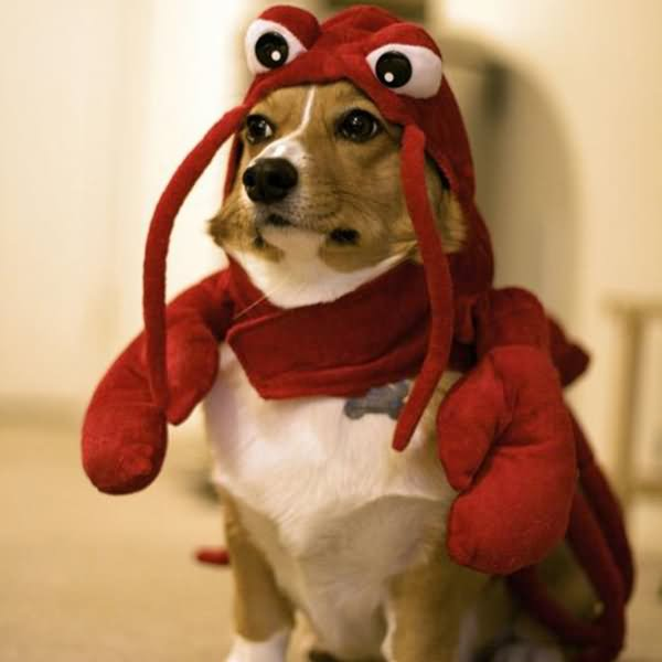 Funny Lobster Costume For Pet