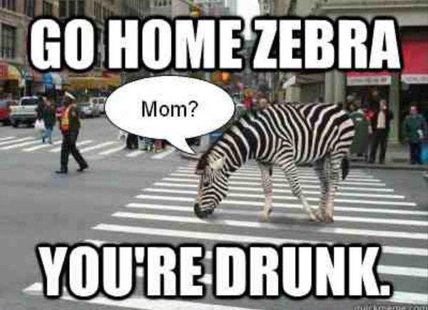 Follow That Zebra Funny Zebra Meme Picture For Whatsapp