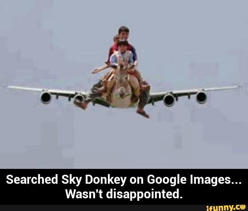 Funny donkey meme - photo#19