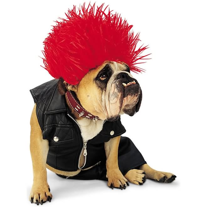 Funny Punk Rock Costume For Pet
