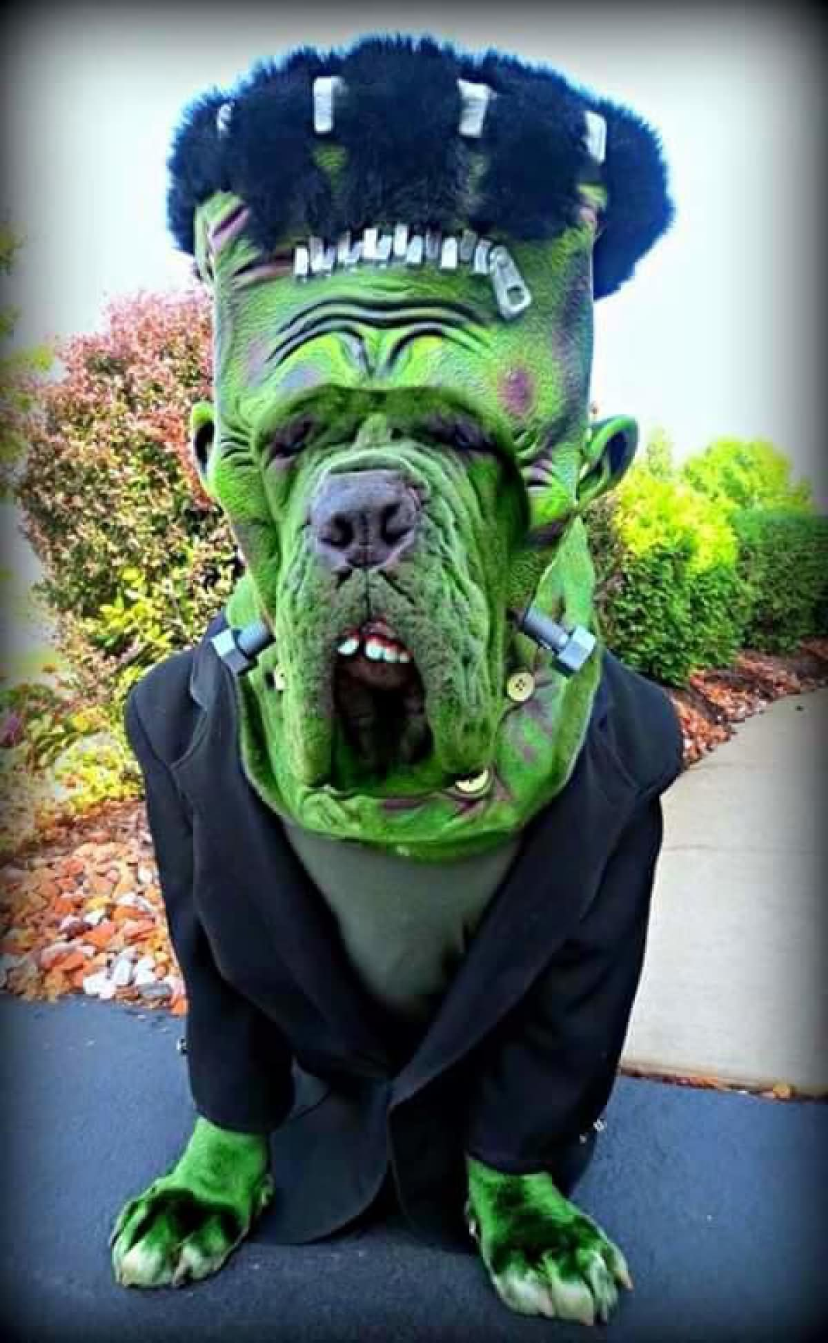 Funny Scary Halloween Costume For Pet Image