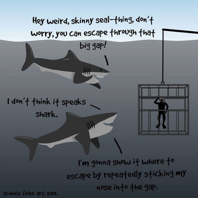 Funny Memes For Whatsapp In : Most funniest shark meme pictures and photos