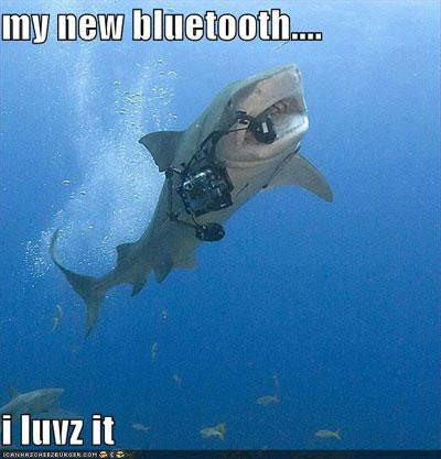 Funny Shark Meme My New Bluetooth Photo For Facebook 40 most funniest shark meme pictures and photos