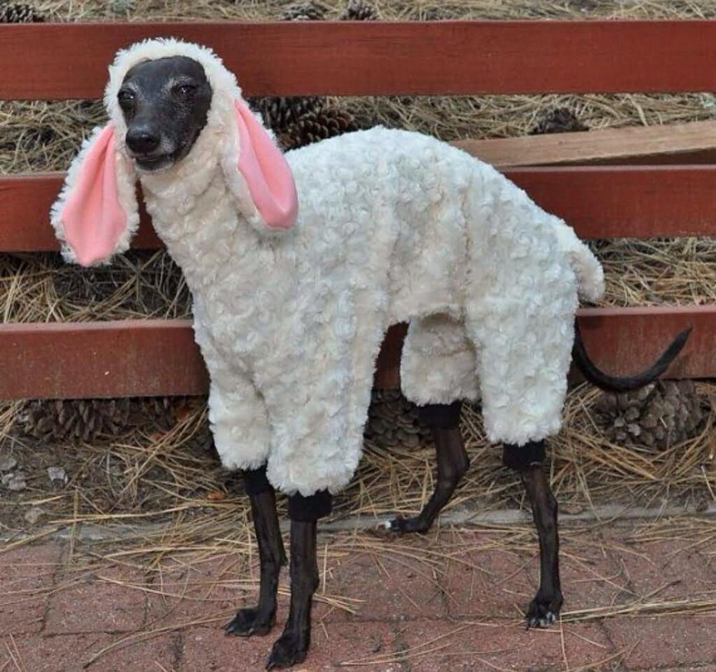 Funny Sheep Costume For Pet
