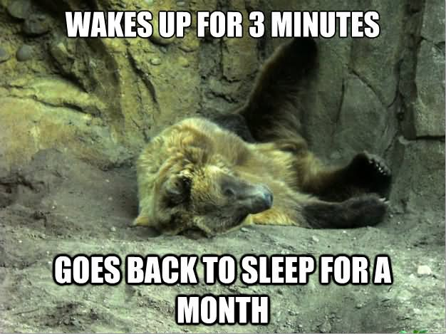 Funny Sleeping Meme : Most funniest bear meme pictures and photos