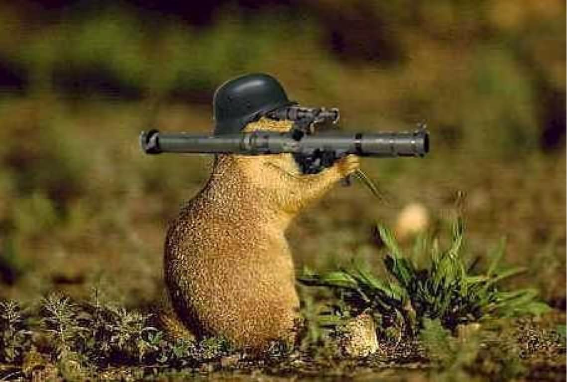 25 funny war animal pictures and images - Pictures of funny animals with guns ...