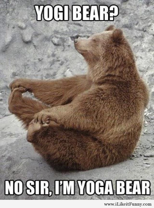 Funny Meme Yoga : Most funniest bear meme pictures and photos