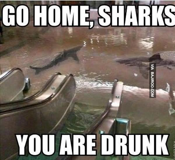 Funny Drunk Meme : Most funniest shark meme pictures and photos