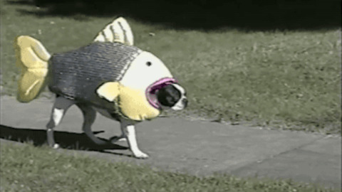 Halloween Fish Costume Funny Picture