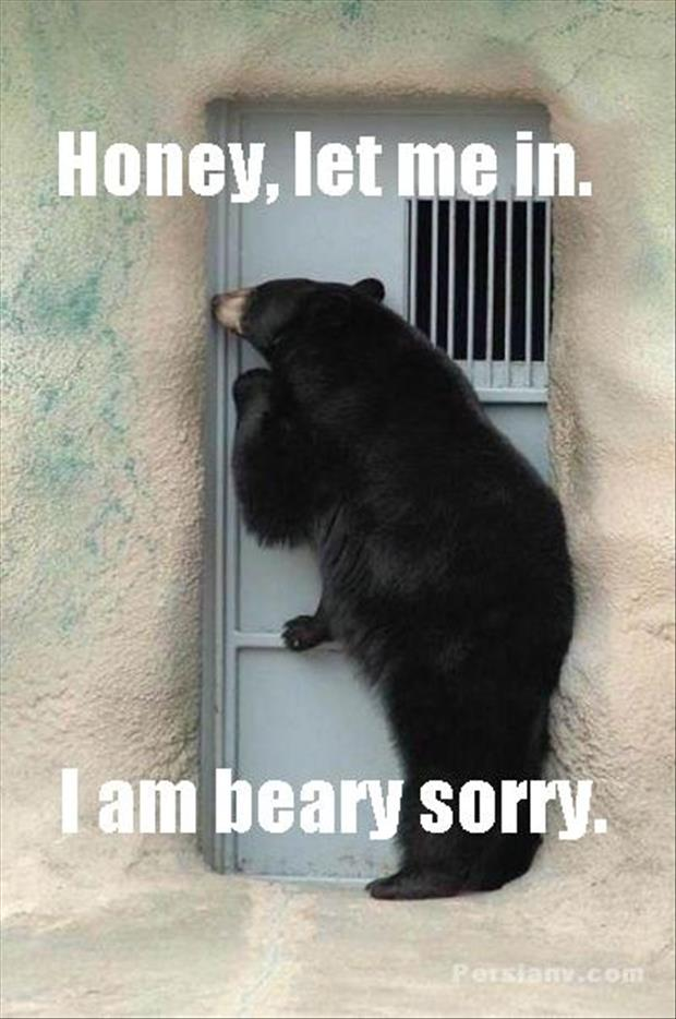 Funny Meme Sorry : Most funniest bear meme pictures and photos