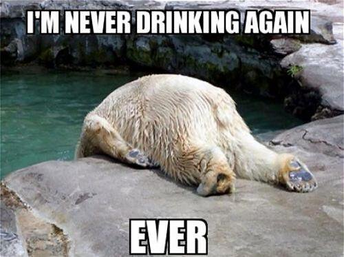 Funny Zoo Memes : 35 most funniest bear meme pictures and photos