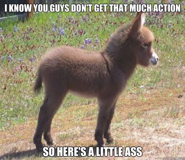 Funny donkey meme - photo#9