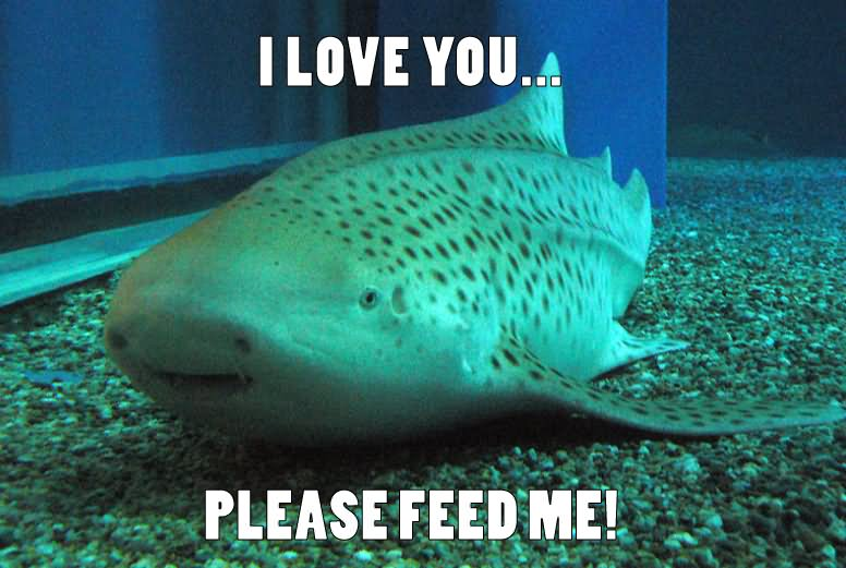 40 Most Funniest Shark Meme Pictures And Photos