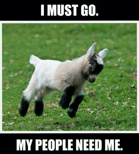 I Must Go My People Need Me Funny Goat Meme Image