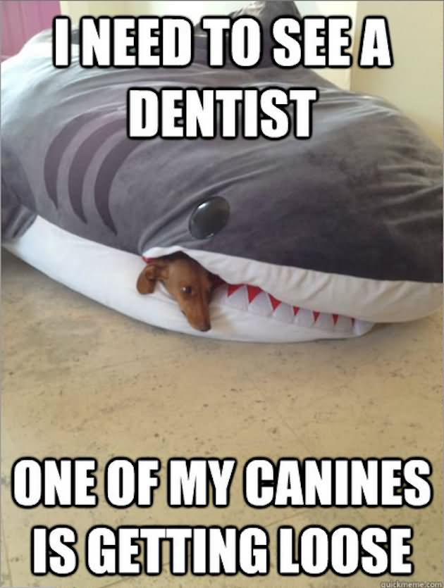 I Need To See A Dentist Funny Shark Meme Image 40 most funniest shark meme pictures and photos