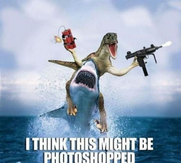 I Think this Might Be Photoshopped Funny Shark Meme Image For Whatsapp 40 most funniest shark meme pictures and photos