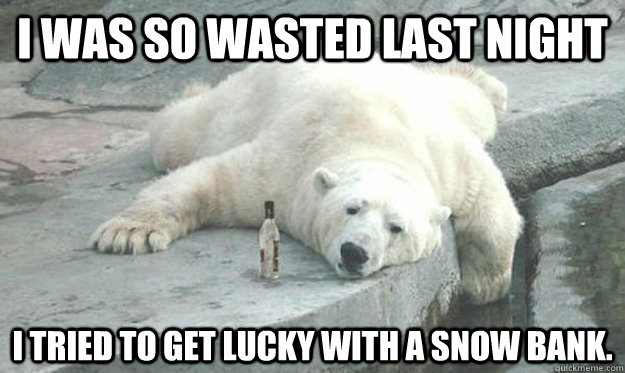 Funny Friday Night Meme : 35 very funny bear meme photos and images