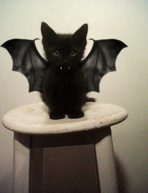 Kitty With Batman Costume Funny Picture