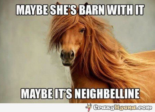 25 Very Funny Horse Meme Pictures Of All The Time