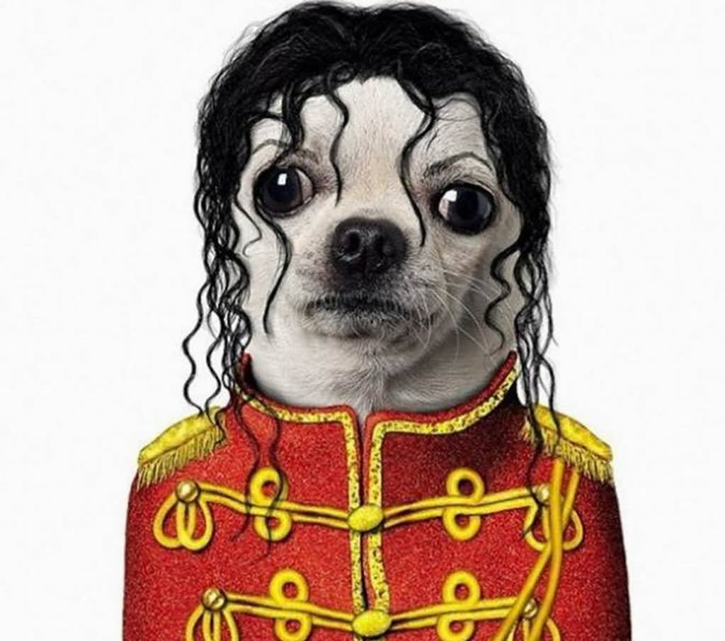 Michael Jackson Costume For Pet Funny Photo