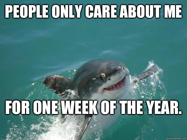 People Only Care About For One Week Of The Year Funny Shark Meme Image 40 most funniest shark meme pictures and photos