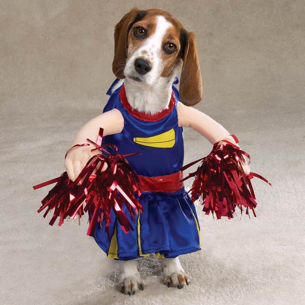 Pet With Cheerleader Costume Funny Image For Whatsapp