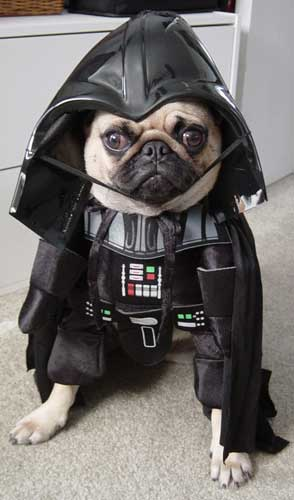 Pet With Darth Vader Costume Funny Picture