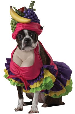 Pet With Hawaiian Girl Costume Funny Picture