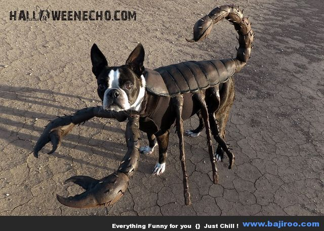 Pet With Scorpion Costume Funny Picture