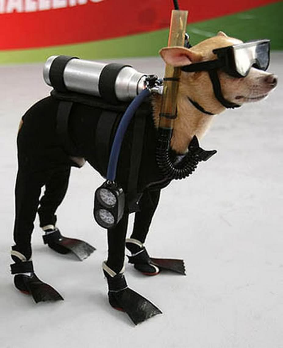 Pet With Water Diver Costume Funny Photo