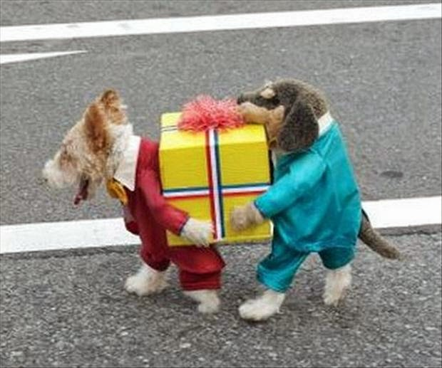 Pets With Halloween Costume Funny Image
