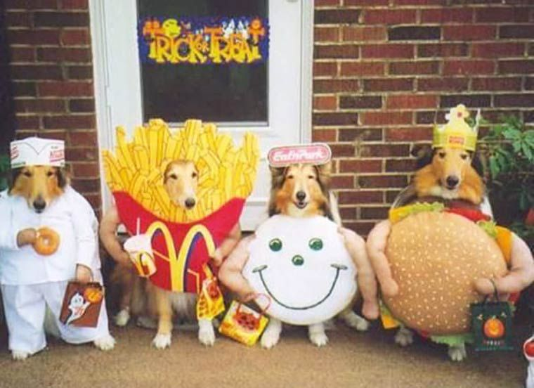 Pets With McDonald's Food Costume Funny Picture For Facebook