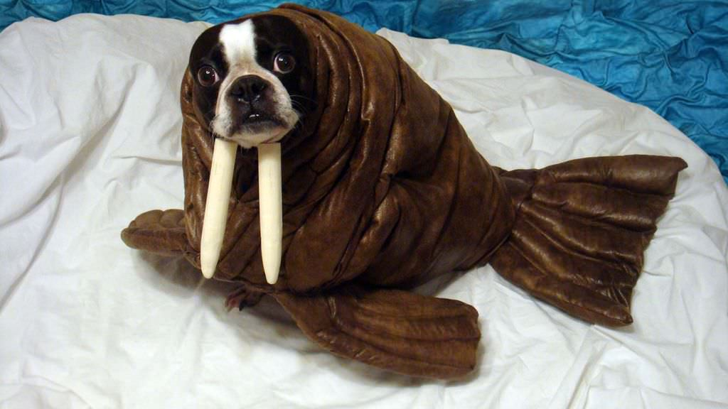 Puppy In Walrus Costume Funny Picture