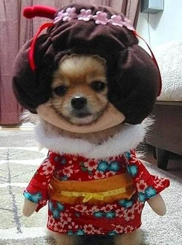 Puppy With Funny Costume