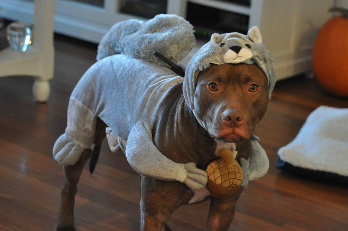 Sad Dog With Squirrel Costume Funny Image