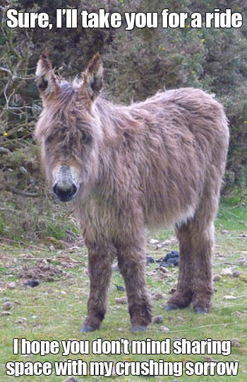Funny donkey meme - photo#26