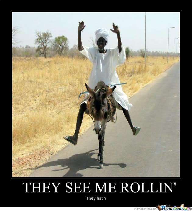 Funny donkey meme - photo#17