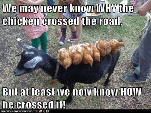 Funny chicken memes - photo#12