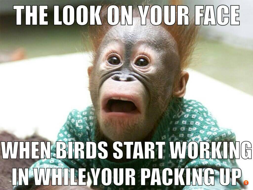 When birds start working in while your packing up funny hunting meme image