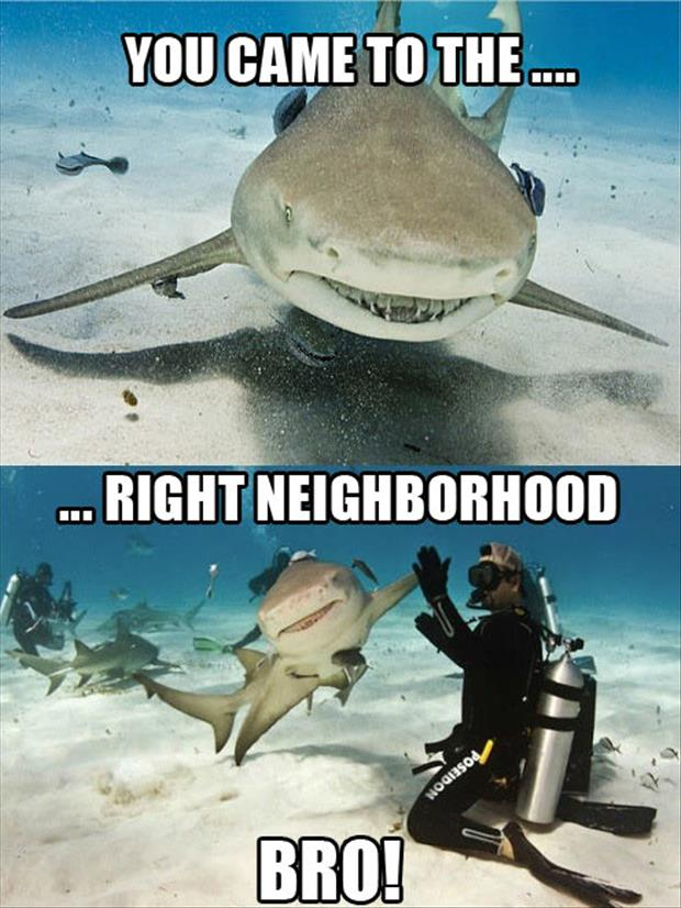 You Come To The Right Neighborhood Funny Shark Meme Image 40 most funniest shark meme pictures and photos
