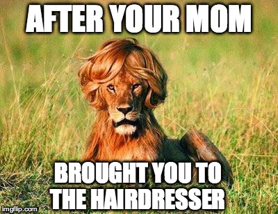 After Your Mom Brought You To The Hairdresser Funny Lion Meme Image after your mom brought you to the hairdresser funny lion meme image