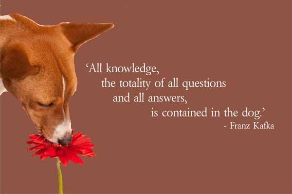Franz Kafka Quotes - Askideas.com